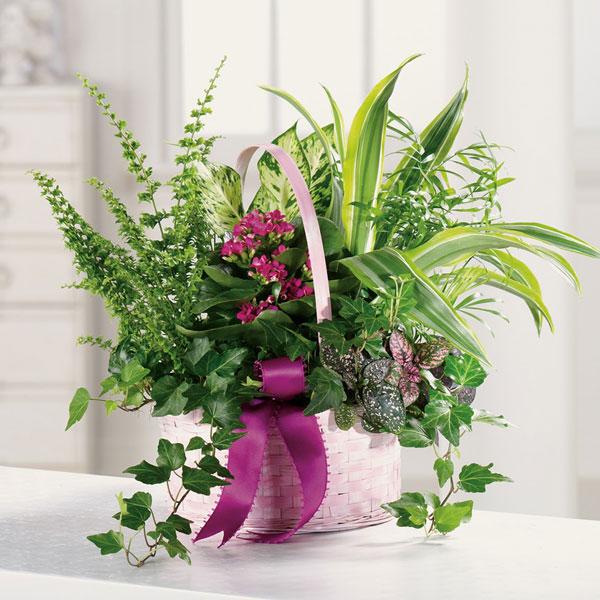 Basket Dish Garden | Palm Springs Florist